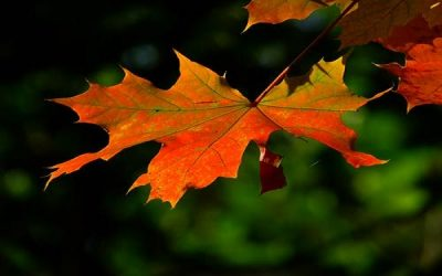 autumn-leaf-colorful-leaves-2