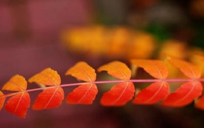 autumn leaves 1a