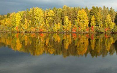 autumn leaves 6a