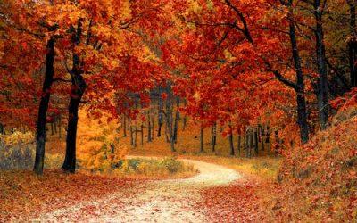 autumn leaves 13