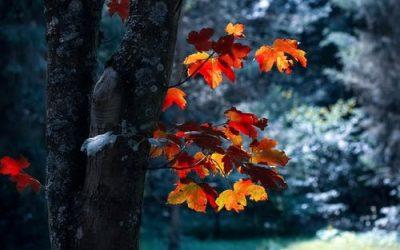 autumn leaves 16